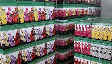 Róże pakowane producent Marek Papuga Sklep ogrodniczy